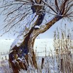 2009 knotwilg in winterlandschap website