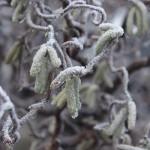 winterfoto thumbnail